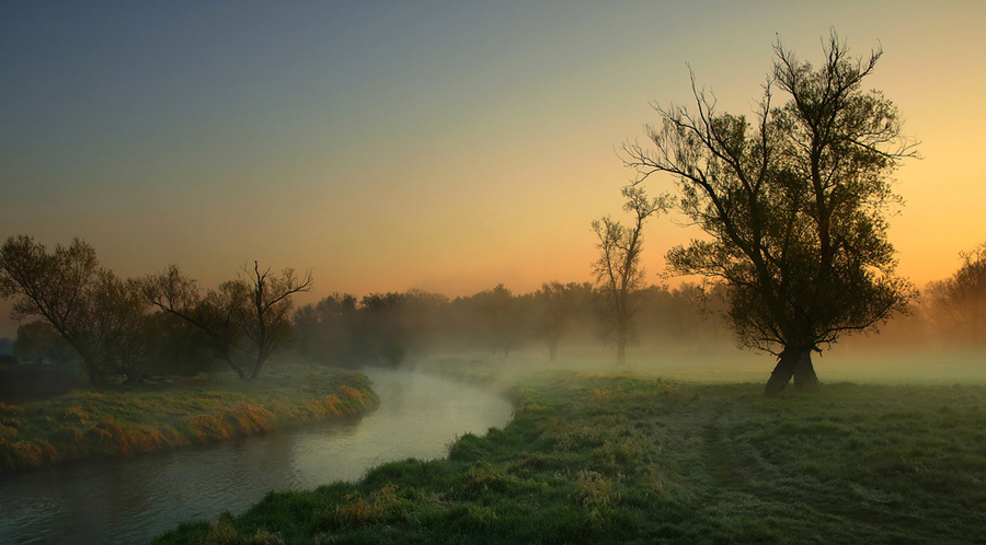 Early Morning | grass, dawn, silhouette, fog, river