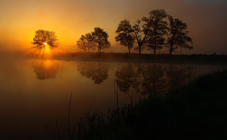 Beams at dusk   lake, rush, reflection, silhouette, dusk