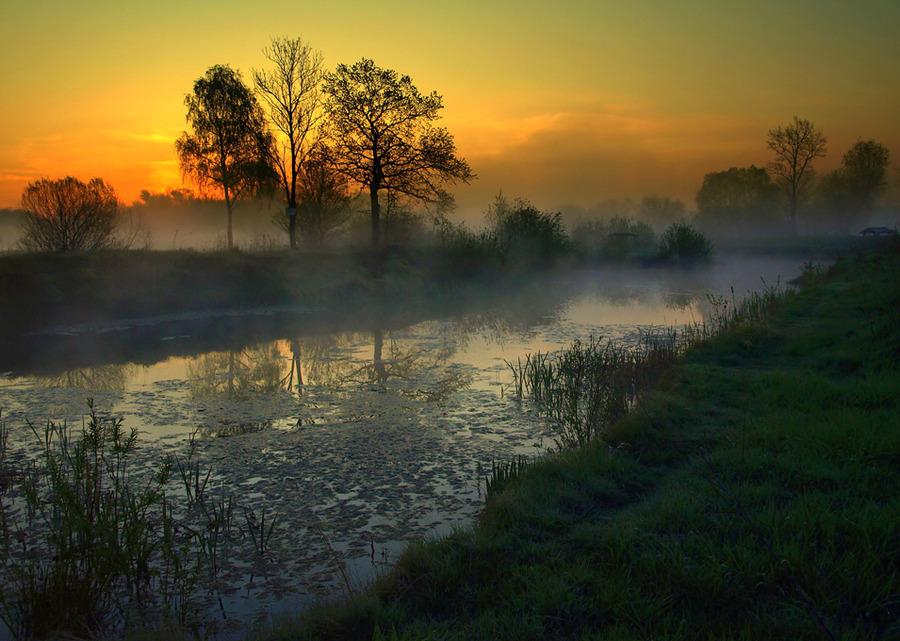 Foggy river   rush, silhouette, river, fog, dawn