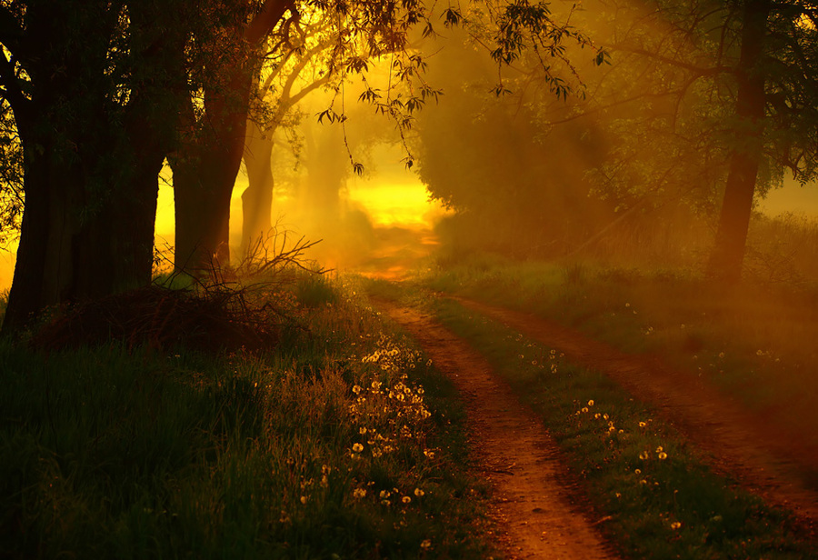 Golden light | forest, light, sun, pathway, flowers