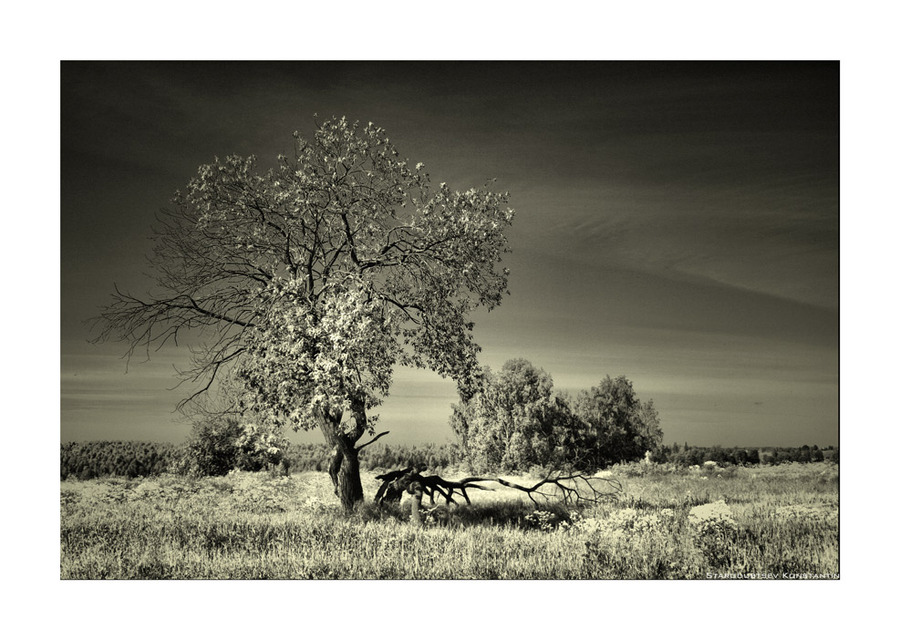 Master. master | tree, desaturate, sky, black and white
