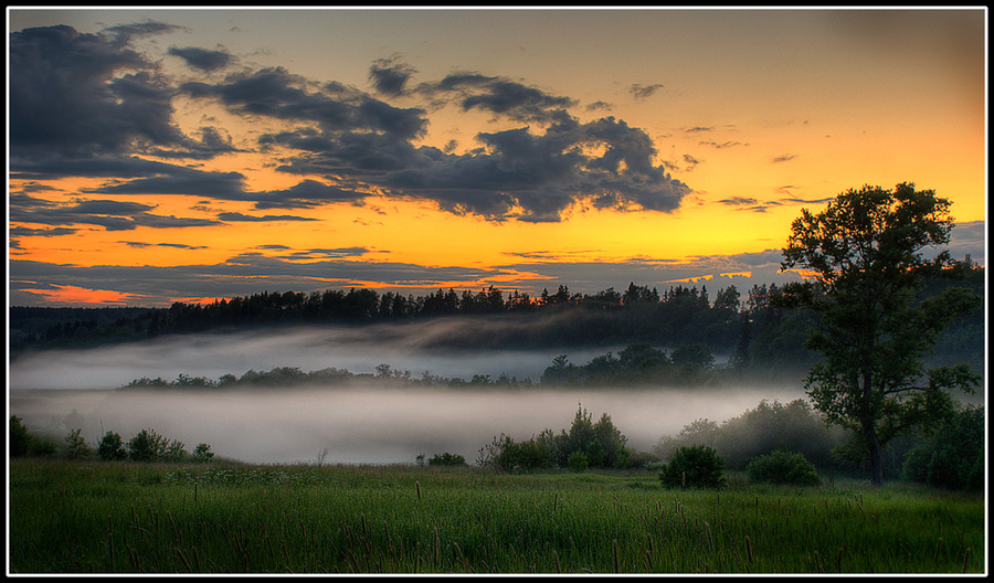 Cradle of Fogs   forest, clouds, fog, field, dawn