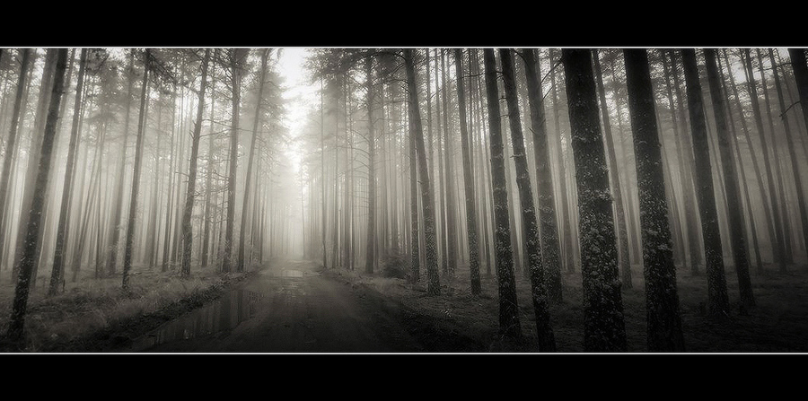 17 instants of spring   trees, black and white, road, forest, fog