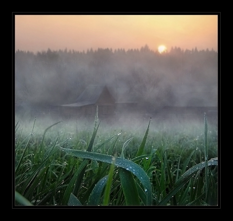 Dew and the grass | village, mist, dew, field, grass