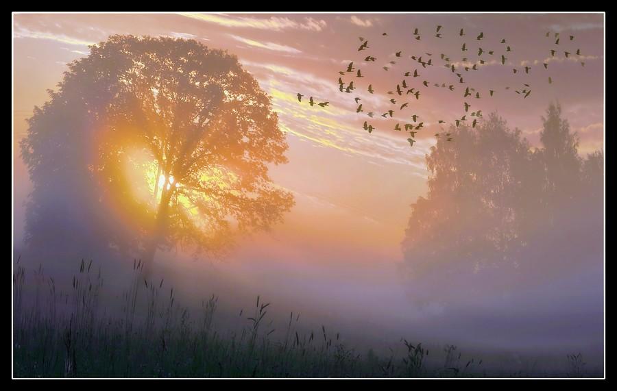 Purple mist   trees, sun, mist, dawn, sky