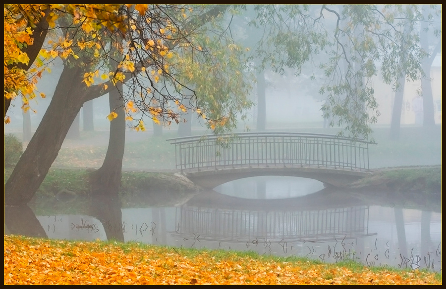 Golden leaves | park, bridge, trees, autumn, fog