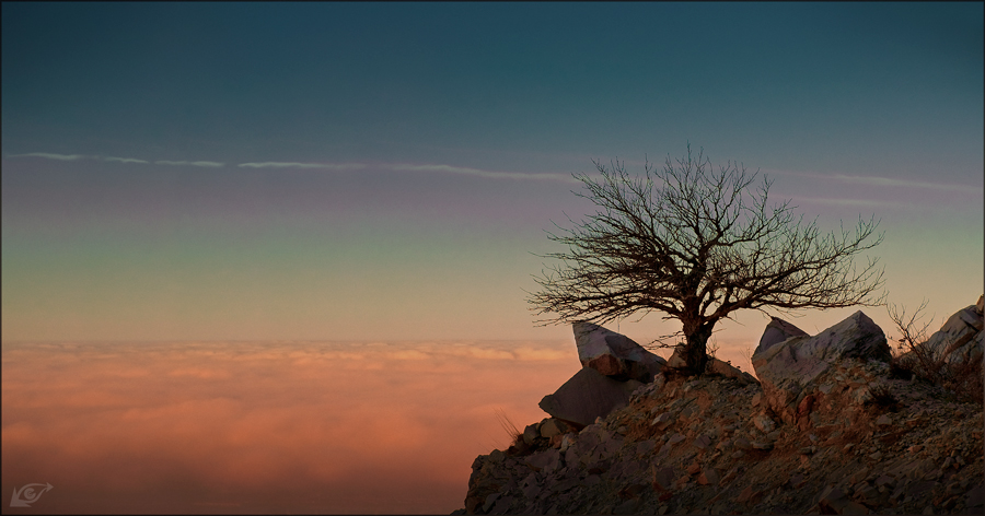 On the edge of loneliness | sky, clouds, rocks, tree