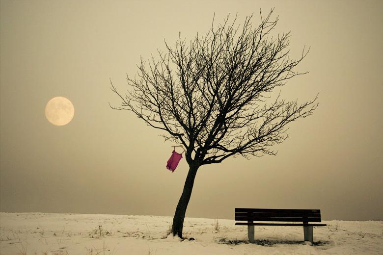 Full moon | field, tree, bench, T-shirt, moon