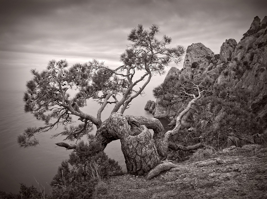 Pine under sea | black and white, rock, trees, rendering, pine