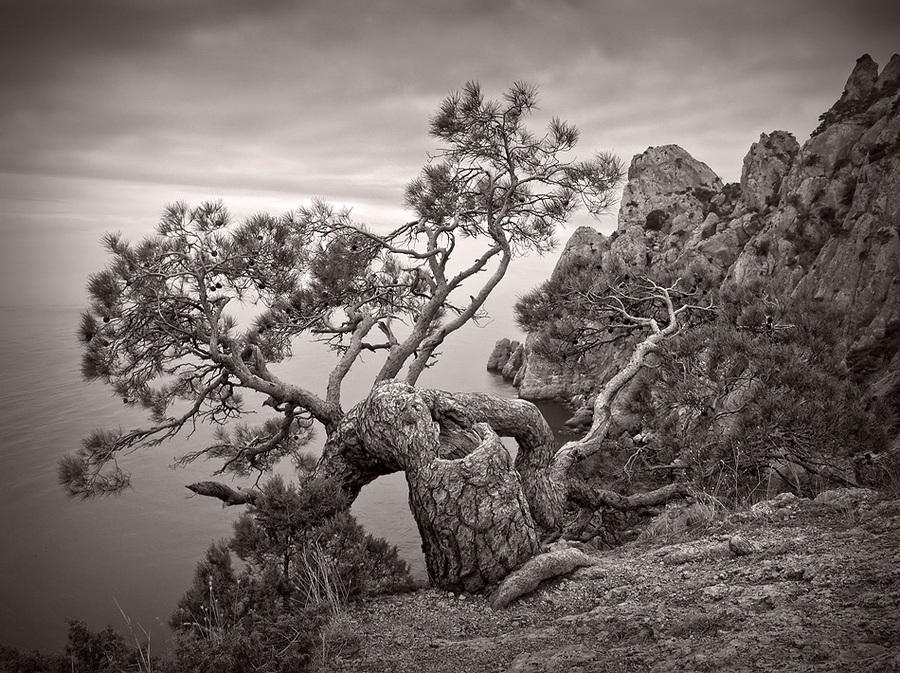 Pine under sea | black and white, rock, trees, rendering, pine