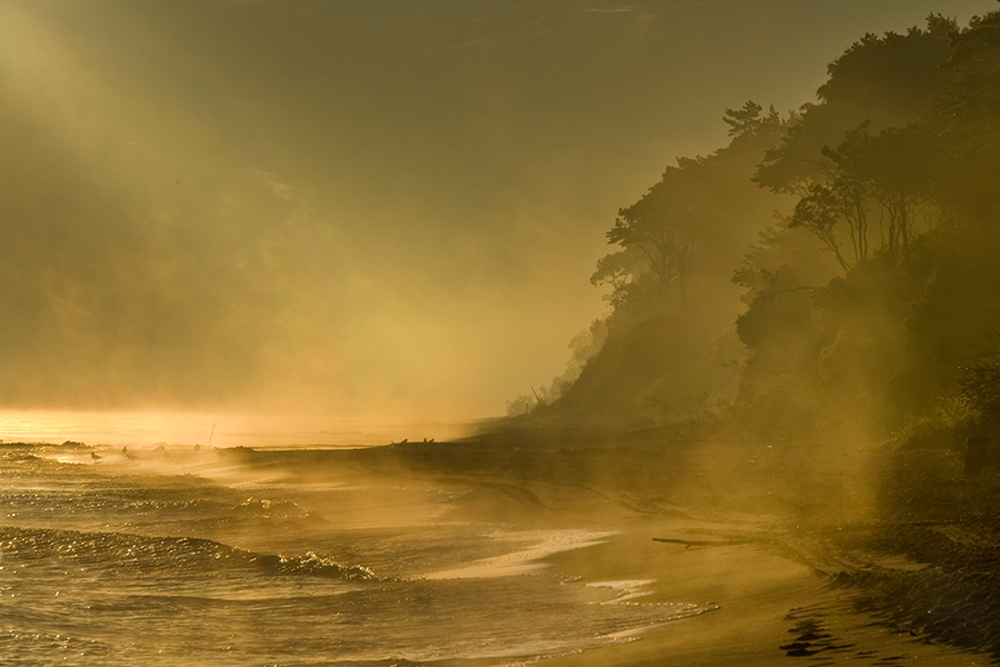 Wild island | sea, shore, mist, waves, trees, sunlight