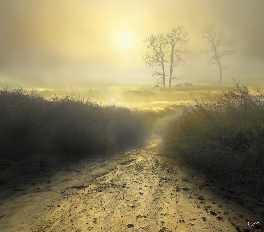 Morning and light | mist, light, pathway, beams, animals