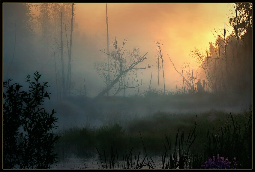 Swamp | fog, morning, rush, swamp