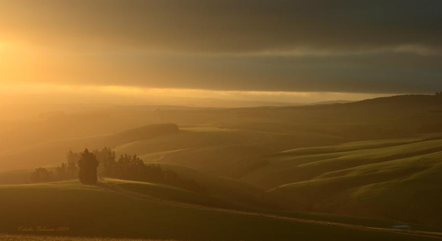 Elfland | sunlight, dawn, mist, field