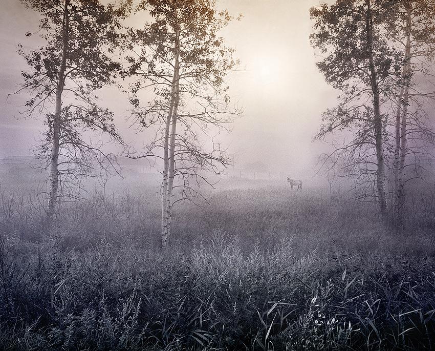 White horse fantasy | trees, autumn, grass, animal