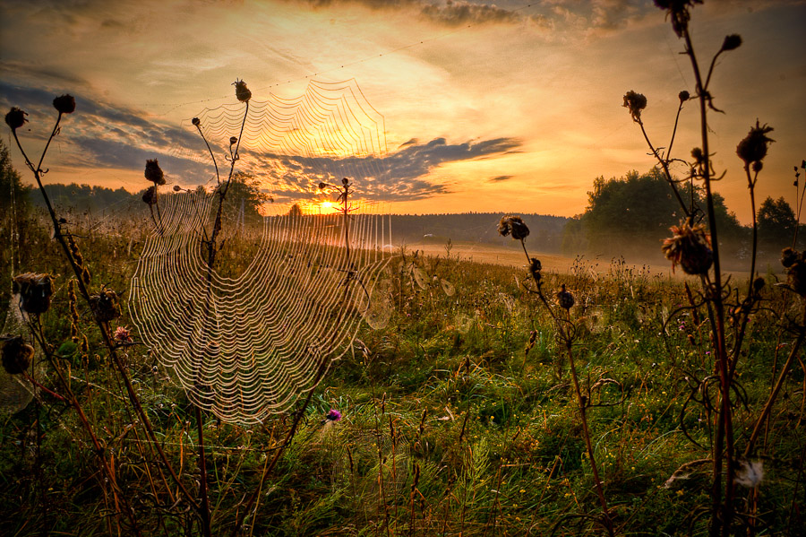 Cobweb and the sun | morning, sun, field, sky, cobweb