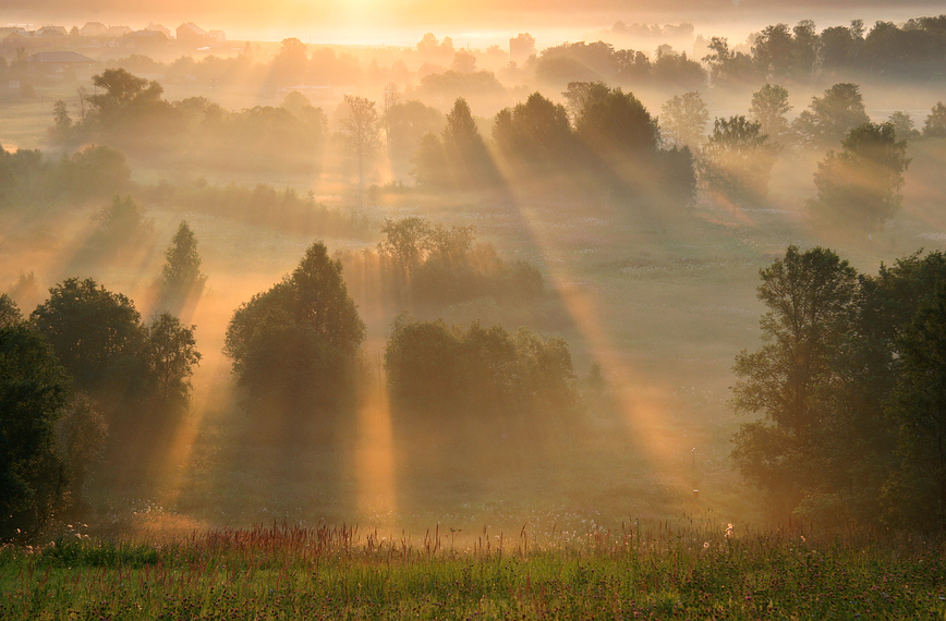 Reborn | morning, field, beams