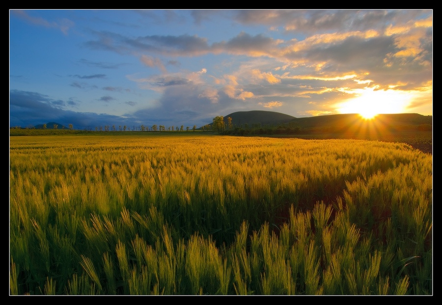In the gold of faraway spring | dawn, sun, field, mountains