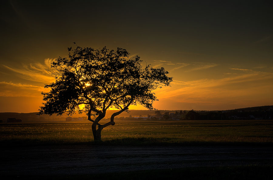 Sunset | sun, field, tree