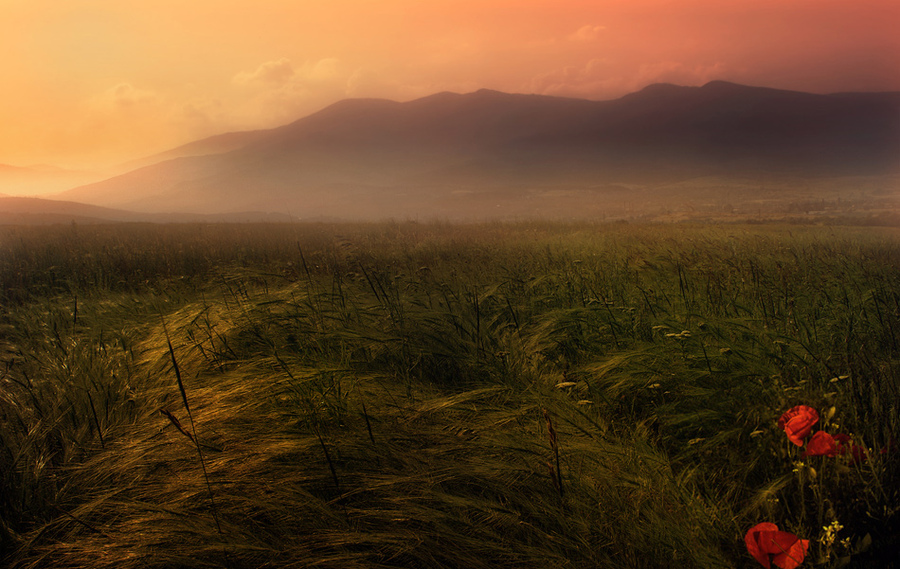 Peaceful place | flowers, mist, field, mountains, poppies