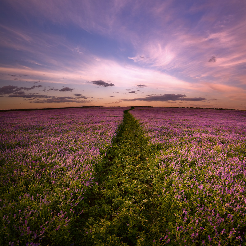 Where the skyline ends | pathway, field, sky, skyline , flowers