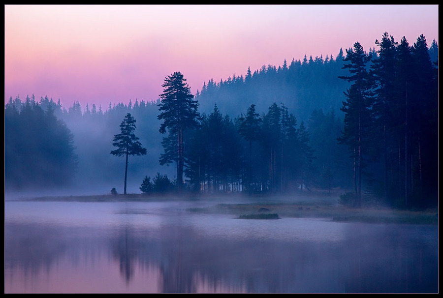 Purple morning | forest, lake, dawn, fog