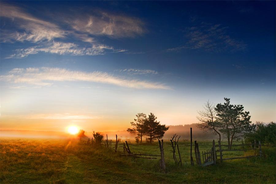 Fog | field, sunrise, fog
