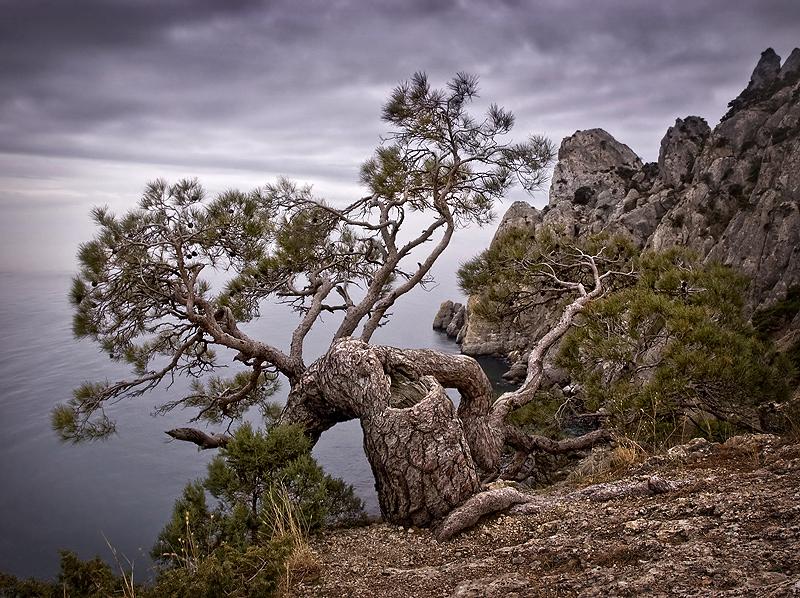 Dragon   sea, rocks, pine