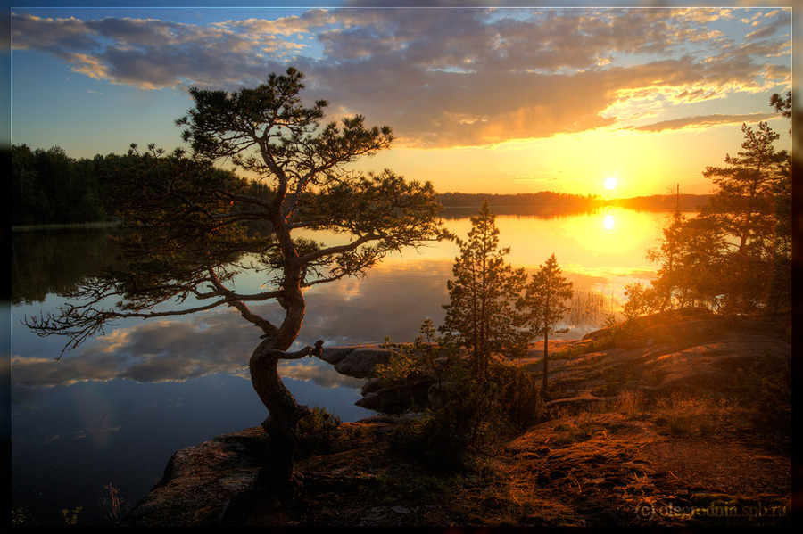 The northern sun was setting | sunset, reflection, river, sun, pine