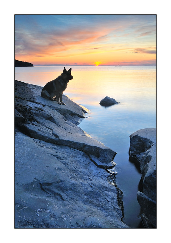 Listening to the silence | rock, lake, sunset, animals
