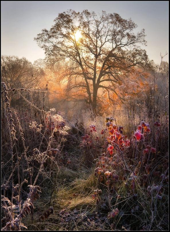 The real magic of autumn | tree, hoarfrost, sun