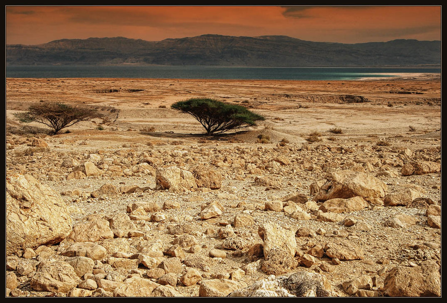 The wild beauty of the Judean desert | tree, stones, sea, desert