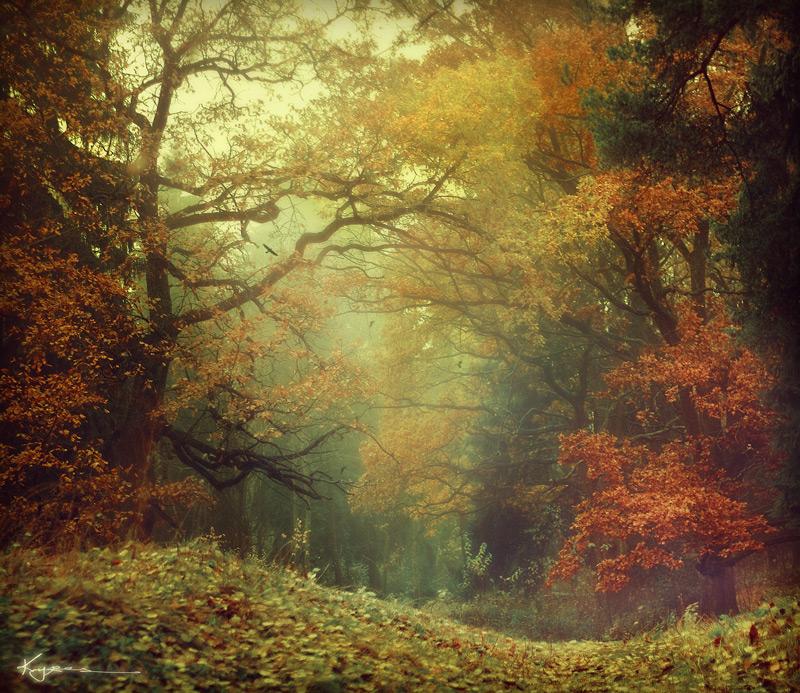 fairytale forest landscape photos