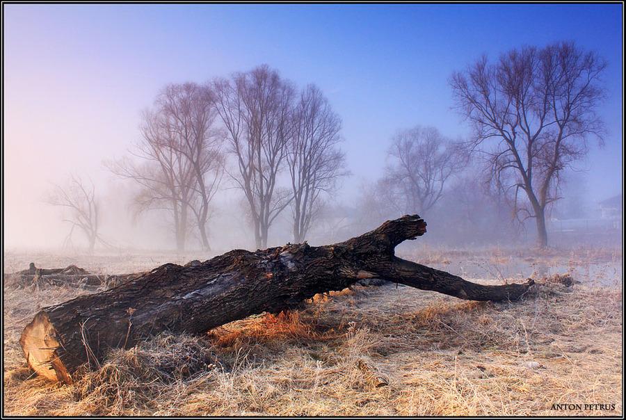 Dead trees still dream sometimes | fog, field, trees