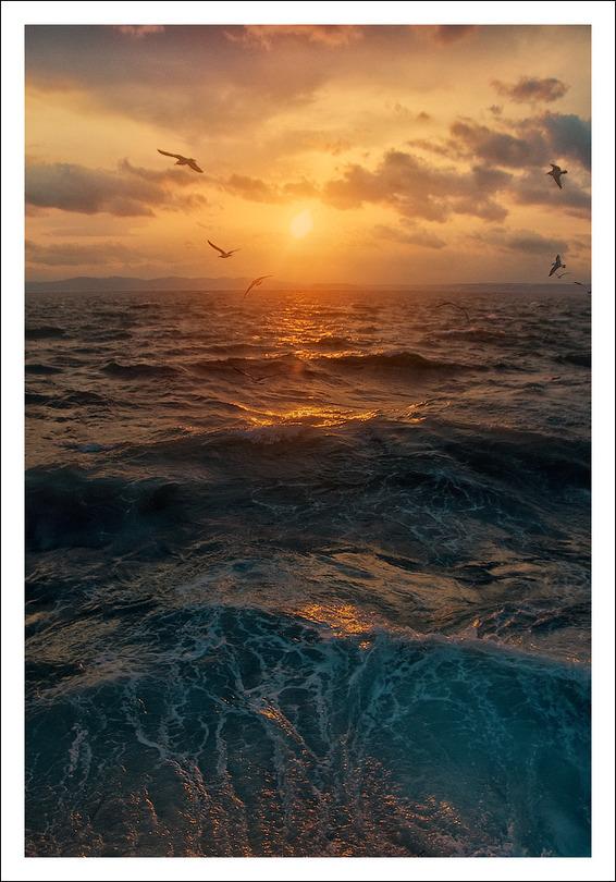 Seagulls | waves, sea