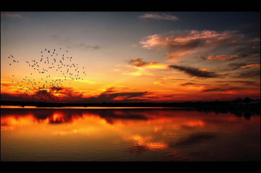 A swift sunset | animals, reflection, sea, dusk