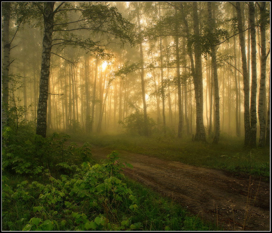 Morning in the fog | fog, pathway, forest