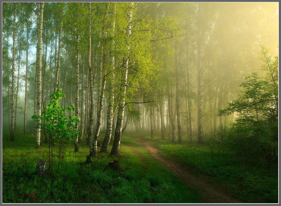 The fog is leaving slowly... | pathway, forest, haze