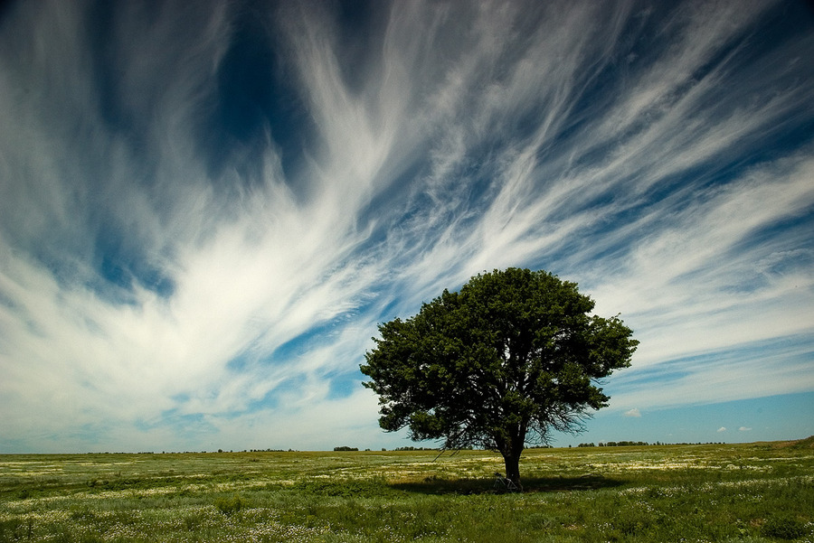 Infinity | field, clouds, tree