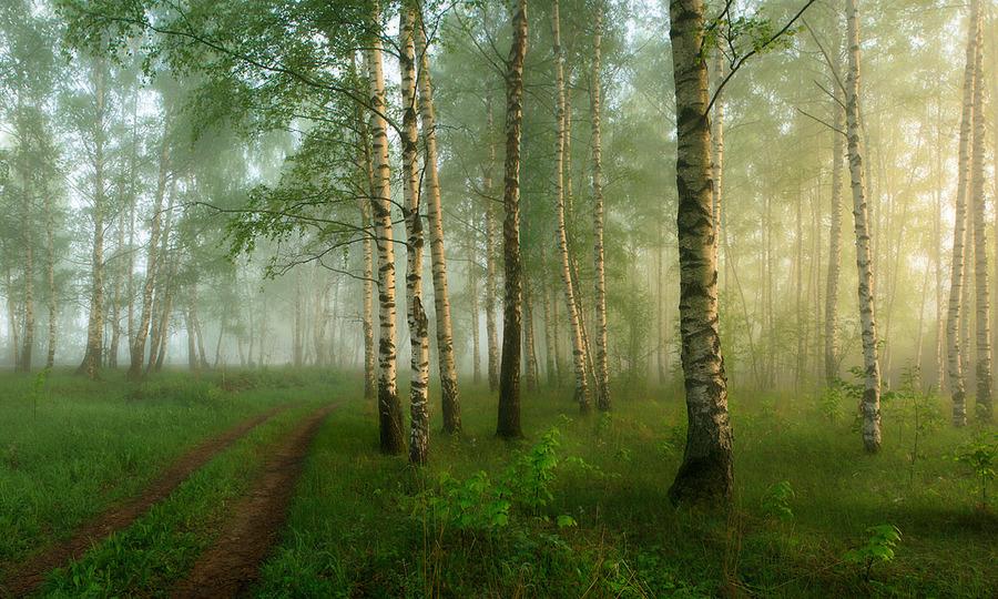 A foggy morning | trees, pathway, fog