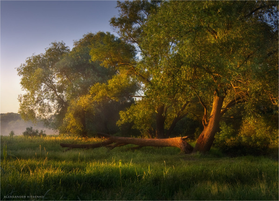 A simple morning   haze, trees