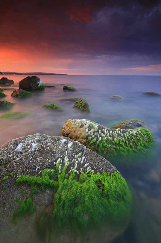 Summer algae | rocks, sea