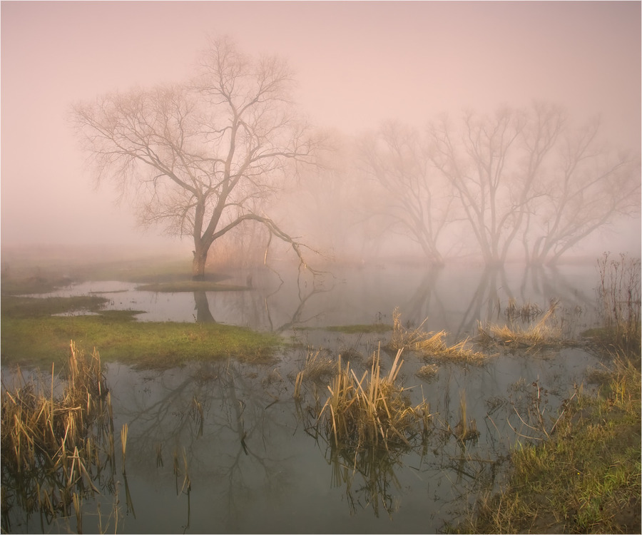 The passing silence | fog, lake, trees