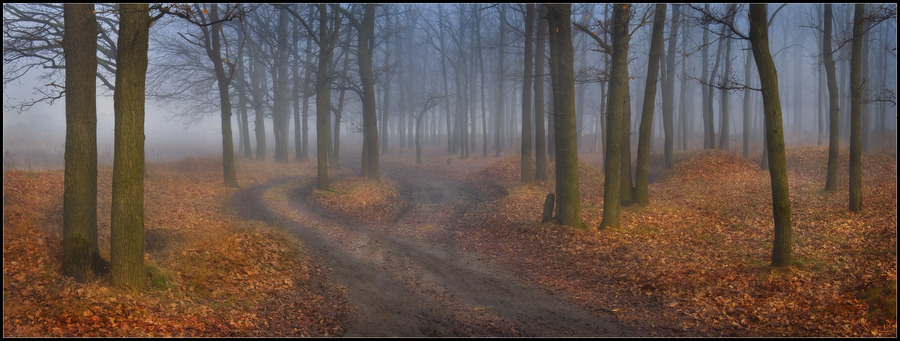 Different roads | fog, pathway, forest
