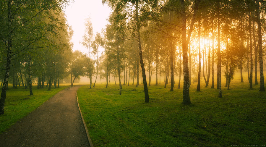 The balance   morning, pathway, park