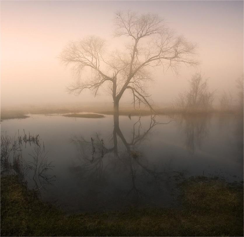 Morning dreams | river, fog, tree