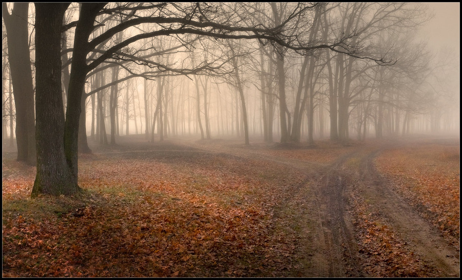 Foggy paths | pathway, forest, fog, autumn