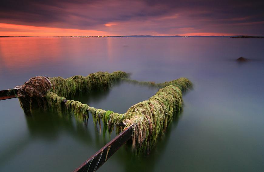 Seaweed   mist, sunset, sea