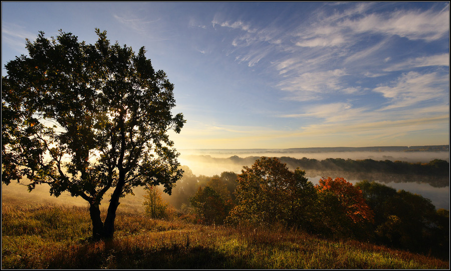 At the shore | tree, mist, morning