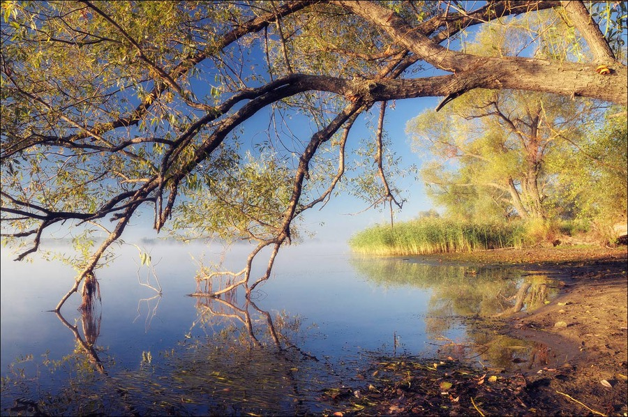 Morning relaxation | swamp, branches, tree